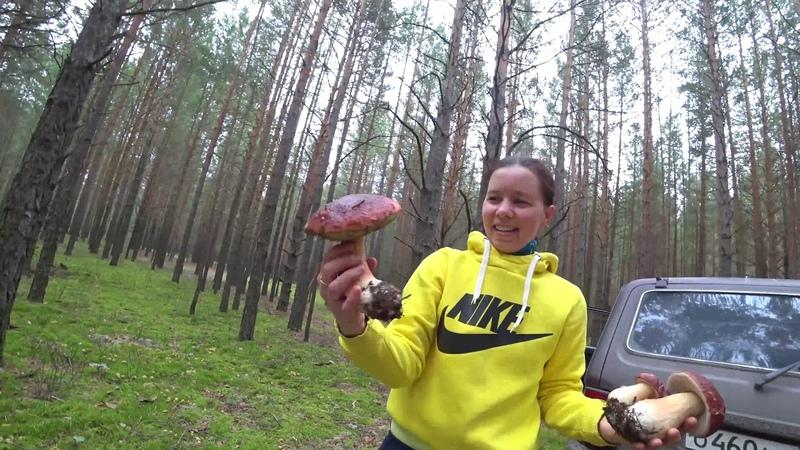 За белыми грибами в Криводаново. Тюмень. Грибной оргазм.
