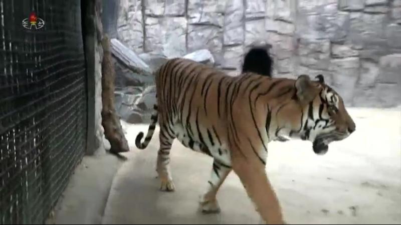 인민들이 즐겨찾는 자연박물관과 중앙동물원