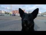 Чёрный пёс радуется квадрокоптеру в Волгограде