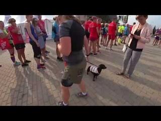 Вся склочность и агрессивность бегунов в одном видео