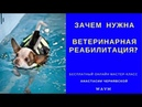 Зачем нужна ветеринарная реабилитация Реабилитолог Анастасия Чернявская