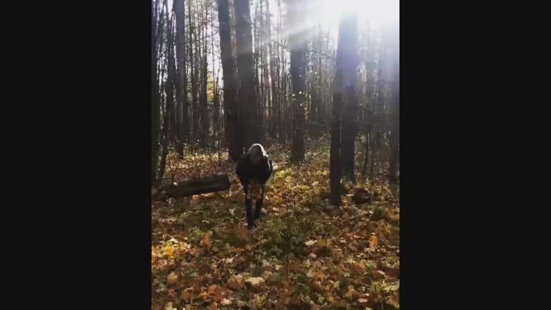 Осень 2018🍁🍃🍂🌿