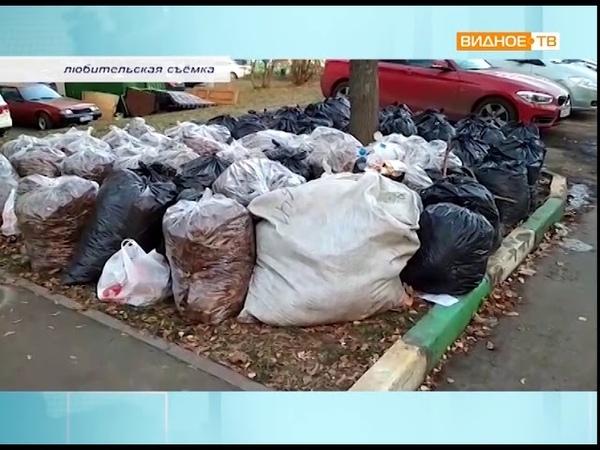 Мобильный репортёр - мусорные мешки на Советском проезде