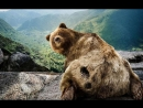 Ильич и медведь