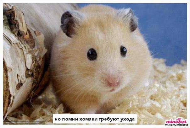 Фото №456239632 со страницы Арины Аникиной