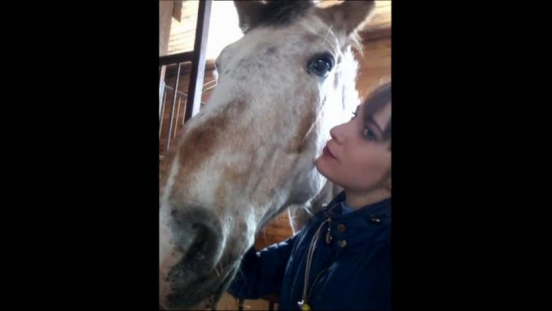 К тому же, саму лошадь сложно чем-либо испугать, поскольку чаще всего она находится в отличной спортивной форме и всегда готова покорять новые вершины.