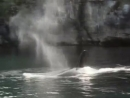 1988 Северо восток Тихого океана В краю живых тотемов - Подводная одиссея команды Кусто