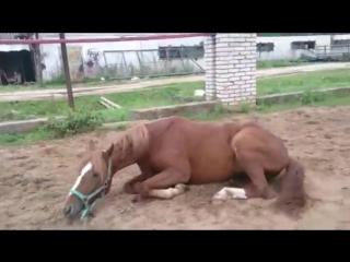 Это не лошадь - это беда