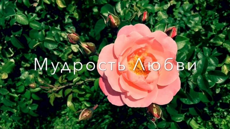Живые Картины Цветение красоты