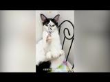 Идеально сбалансированный кот