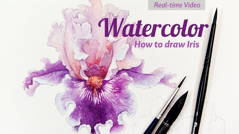 How to Draw Irises Watercolor. Real-time Video. Part 1.