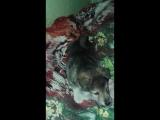 Поздравление моего пёсика Ярика со Старым Новым Годом)))