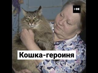Кошка спасла брошенного малыша