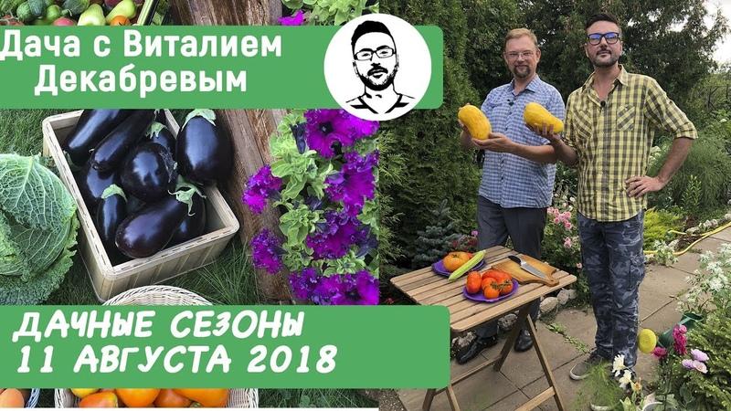Дачные сезоны с Виталием Декабревым 11 августа 2018