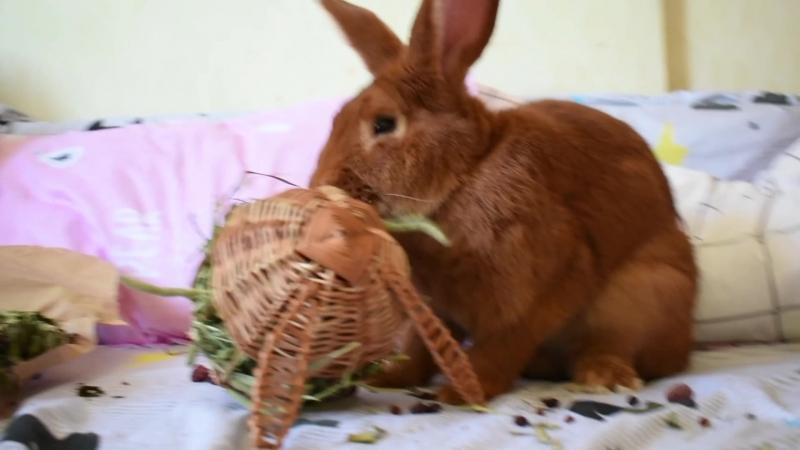 Крутой банни бокс Гурмэ и плетеные игрушки для кролика Йена