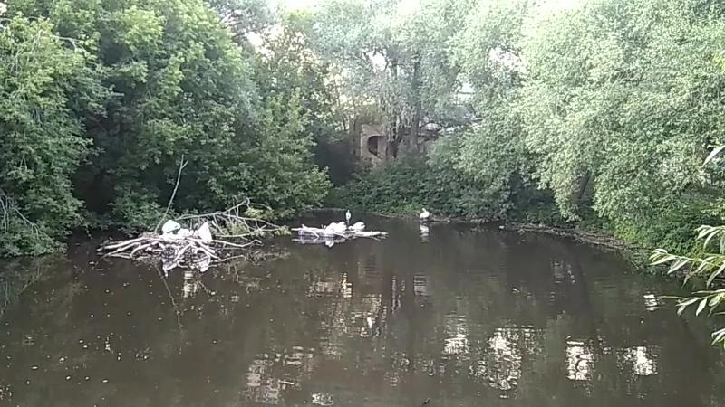 Пеликаны с бакланами