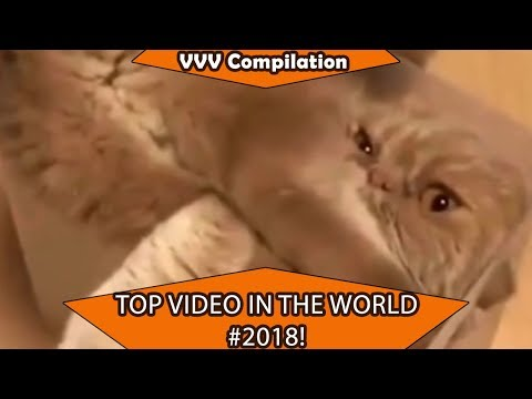 FUNNY ANIMALS COMPILATION 😂😆😀 CUTE PETS 🐢🦄🐳 5
