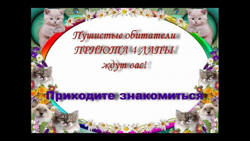 Кошки и котики приюта (новая версия)