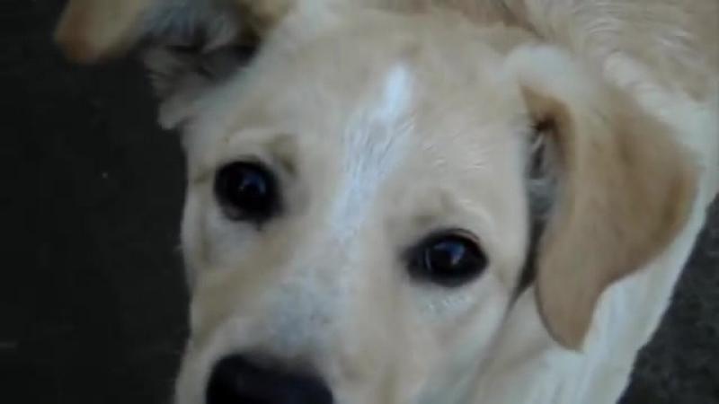Социальный ролик про бездомных животных.