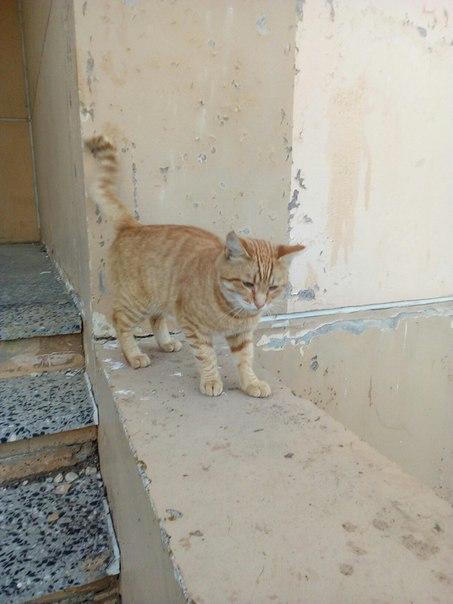 Котик ищет дом. 2 года. Диковат. Живёт на улице. 89105349821 анон