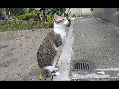 Bikin Menangis Kucing Ini Tetap Semangat Walaupun Kondisi Cacat