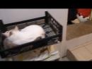 Бездомные котики обрели место в приюте для кошек