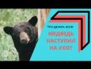 Медведь наступил на ухо