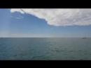 В Чёрном Море