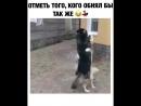 ПОДПИСАТЬСЯ point right @sreda pozitiva собаки танцы инстаграм актуальное 800 X 640 mp4