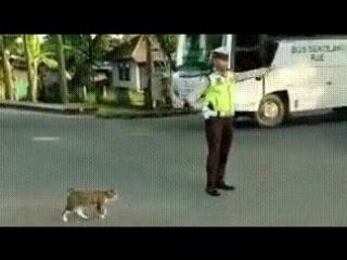 Здравствуйте, господин полицейский, пожалуйста, проведите меня через улицу