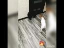 Кунг-фу Дейзи 🥋🐶🐾 и кот Мартин 🐱🐾🤪😅😅😅