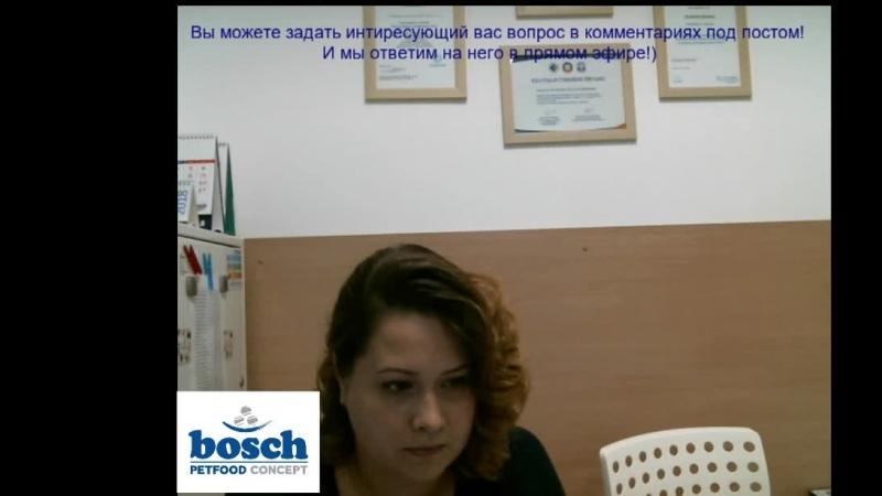 Bosch Club - Беременность и уход за беременным питомцем