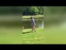 Гусь отбил атаку гольфиста защищая своё гнездо в США