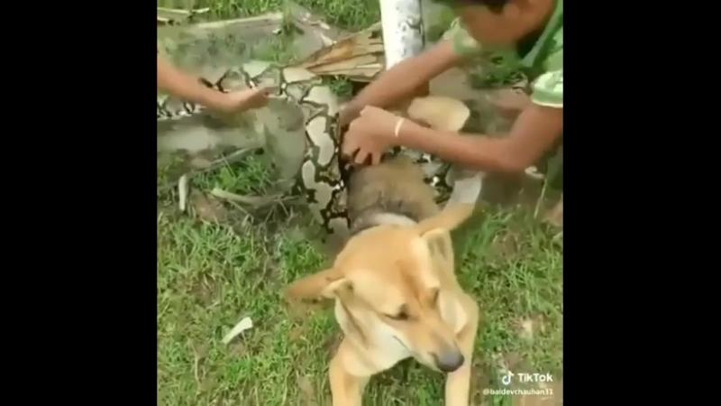 Удав чуть было не задушил собаку
