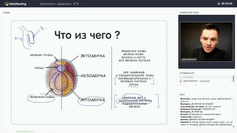 Онтогенез, бластула, гаструла - ЕГЭ биология