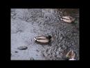 2014-11-30 4ая часть Inst.Gold Coll- Том 2 CD 2 12. Le Vent, Le Cri 13. Paraplues De Sherbourg 14. Un Homme Et Une Femme