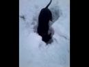 Охота на мышей.27.01.18