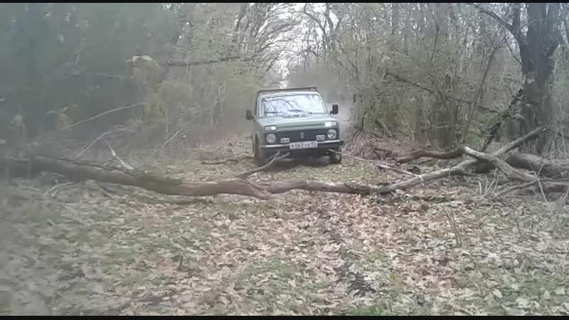 Очищаем себе путь от поваленных деревьев. Челбасский лес.