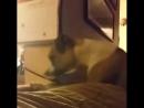 Бешеные кошки