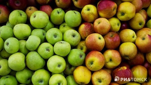 Около 150 тонн санкционных яблок уничтожено в Томской области в 2018г.