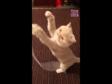 Алина Загитова - кошка Ириска