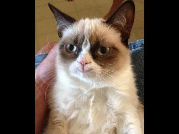 Grumpy Cat SMILE D