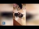В одной из ветеринарных клиник Ростова-на-Дону появился новый сотрудник — енот Яша.   Яша успокаивает разволновавшихся пациентов