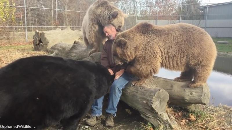 Папины медведи
