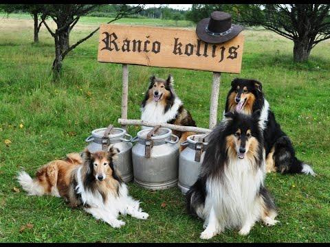 Ranch Collie video advertisement Rančo kollija video reklāma
