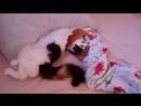 красиво спит киса