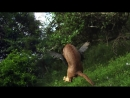Мир Животных Каракал