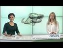 Антикоррупционное законодательство РФ Коррупция что делать