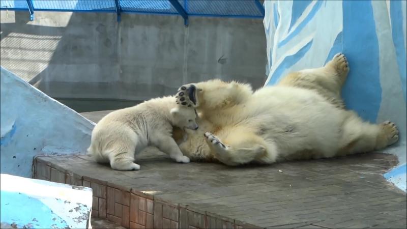 Веселые картинки из жизни медвежонка Ростика