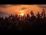 Applescal & Ryan Davis - Creatures (NPot Unofficial Remix)